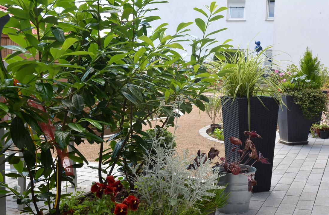 2019-06-17 Blick Garten 1.2.jpg